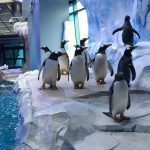 Zoo's penguin center is marvel of high-tech design