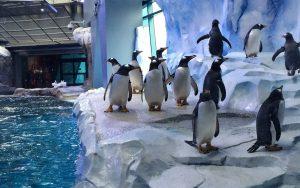 penguins-detroit0416