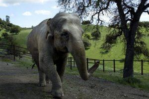 Children's book recalls Detroit Zoo's last elephants