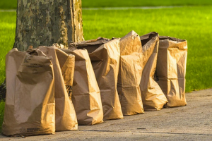 City of Detroit Department of Public Works are Collecting Yard Waste