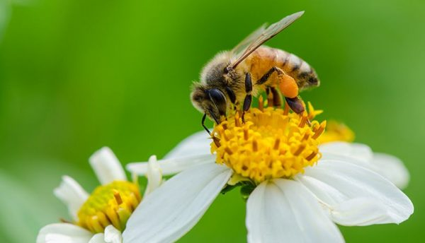 Michigan's bee population is declining, raising concerns for farmers